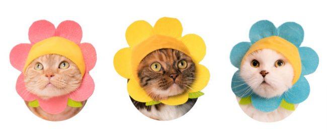 Neko flower chan