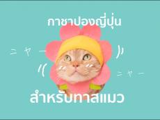 รวม 10 กาชาปอง ญี่ปุ่น  สำหรับทาสแมวโดยเฉพาะ