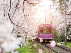 รวมข้อมูล บัตร JR Pass สุดคุ้ม ครบเครื่องเรื่องรถไฟเที่ยวญี่ปุ่น