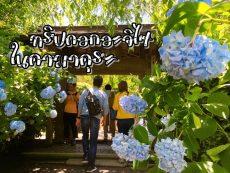 Reveiw ทริปชมดอก Ajisai ไฮเดรนเยีย ญี่ปุ่น 4 พิกัดบรรยากาศดีที่ คามาคุระ