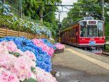 สีสันหน้าฝน ชมดอก ไฮเดรนเยีย ญี่ปุ่น บานสะพรั่ง สัมผัสความสดชื่น