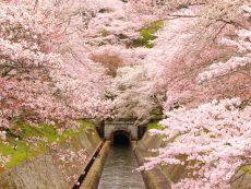 สวยจับใจไป ชมซากุระ ใบไม้เปลี่ยนสี ที่ Otsu สัมผัสกลิ่นอายแห่งฤดูกาล