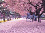 เที่ยวโทโฮคุ ญี่ปุ่น สโลว์ไลฟ์ 4 ฤดู…สู่ประสบการณ์สุดประทับใจのサムネイル
