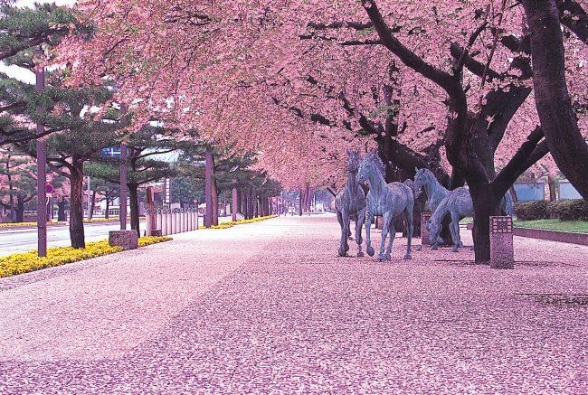 เที่ยวโทโฮคุ ญี่ปุ่น สโลว์ไลฟ์ 4 ฤดู…สู่ประสบการณ์สุดประทับใจ