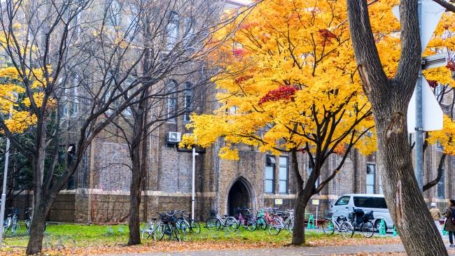 ใบไม้เปลี่ยนสี ฮอกไกโด