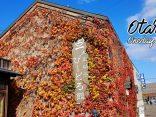เที่ยวโอตารุ เมืองเล็ก วิวใหญ่ ใบไม้เปลี่ยนสีแสนสวย กินแน่นๆ ฟินน์แน่นอน