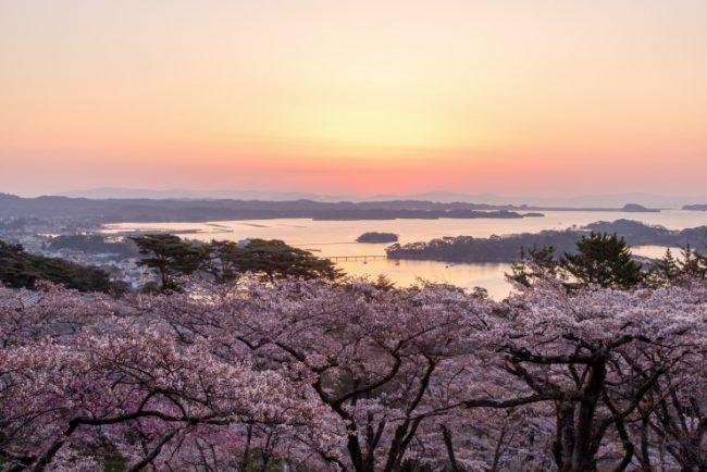 5 จุดชม ซากุระ โทโฮคุ  กลางเดือนเมษายนก็ชมได้ เดินทางสะดวกจากโตเกียว!!
