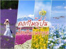 แจกพิกัด สวนดอกไม้ญี่ปุ่น ชมดอกไม้ตลอดปี สวยไม่แพ้ซากุระ