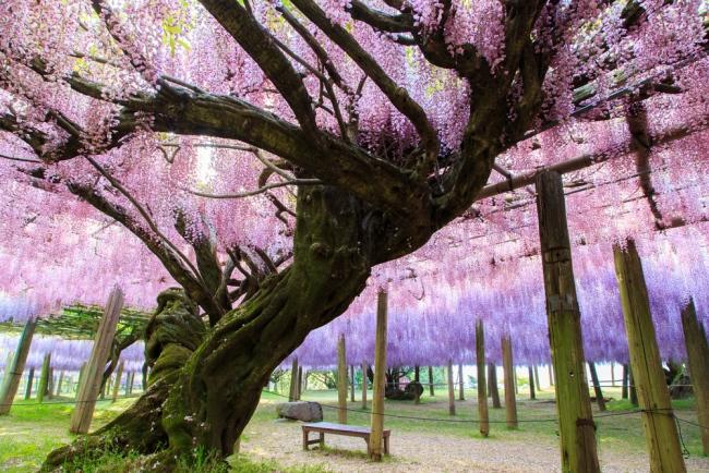สวน ดอกไม้ ญี่ปุ่น
