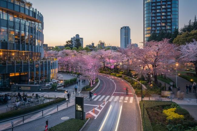ซากุระ 2020