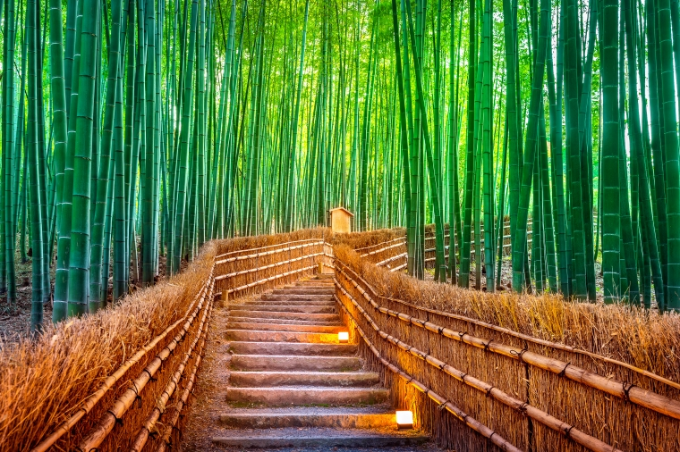 ป่าไผ่ เกียวโต