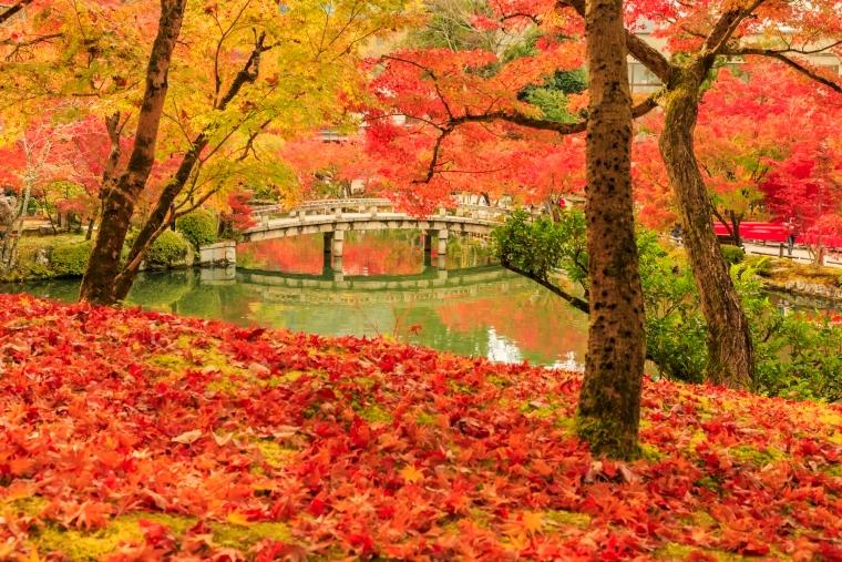 ฤดูกาลท่องเที่ยว ญี่ปุ่น