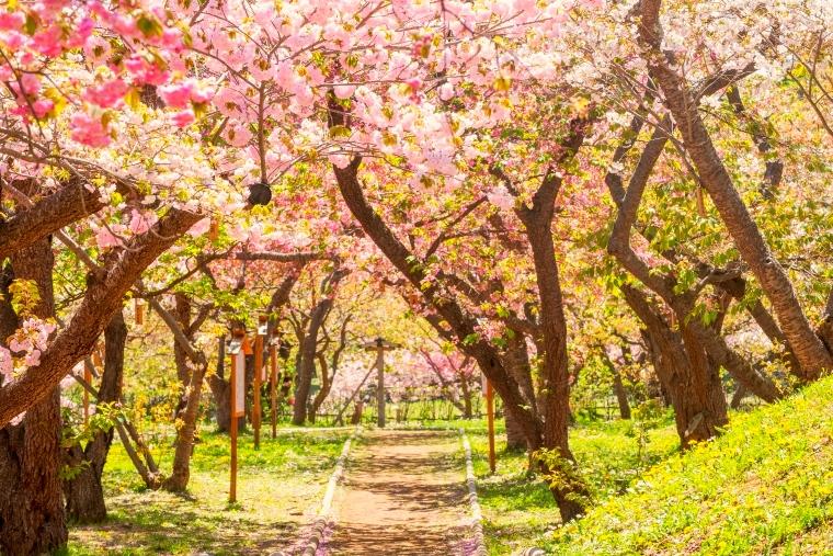 ฤดูกาลท่องเที่ยว ฮอกไกโด
