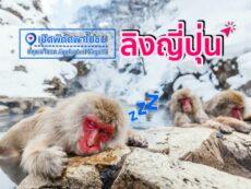 เปิดพิกัดพาไปชม ลิงญี่ปุ่น ที่หุบเขานรก Jigokudani Nagano