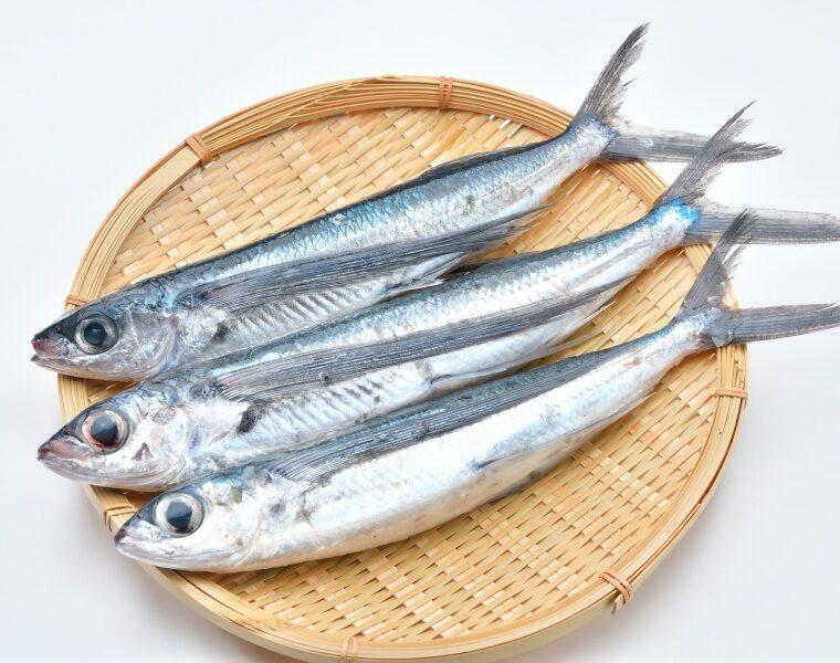 ปลาบิน  (Tobiuo)