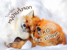 ไปหาน้องจิ้งจอกให้ใจฟู ที่ หมู่บ้านจิ้งจอกญี่ปุ่น Zao Fox Village แห่งมิยางิ