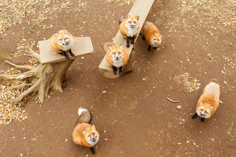 Zao Fox Village