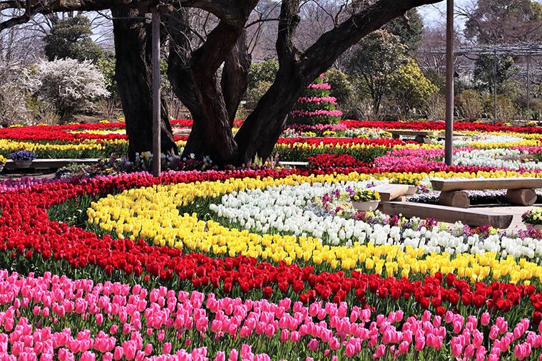 สวนดอกไม้อาชิคางะ