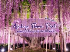 ชมดอกไม้เพลินๆ ตลอดปีที่ สวนดอกไม้อาชิคางะ (Ashikaga Flower Park) แห่งโทชิงิ
