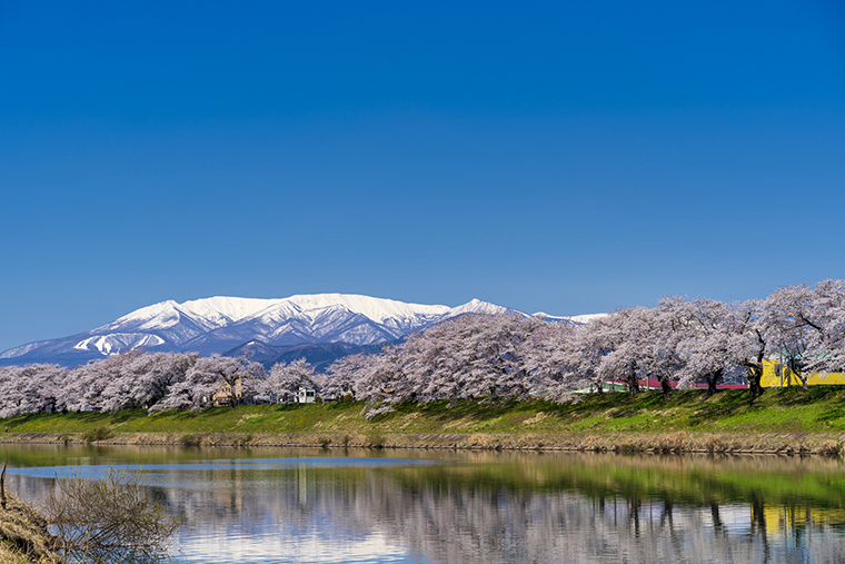 ฤดูใบไม้ผลิญี่ปุ่น