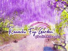 หลงสเน่ห์ อุโมงค์วิสทีเรีย สวนคาวาชิฟูจิการ์เด้น (Kawachi Fuji Garden)