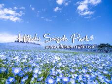 Hitachi Seaside Park ดินแดนแห่งดอกไม้ หลากกิจกรรม สนุกได้ทั้งปี